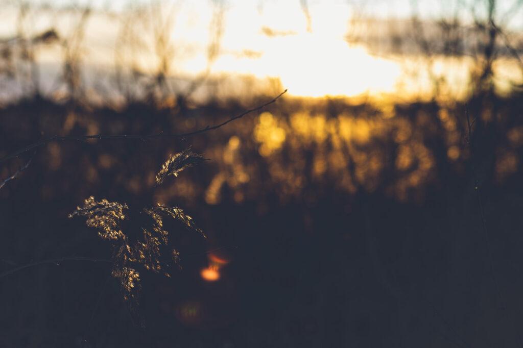 Naturbild med solen som bryter igenom i bakgrunden.